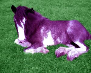 Purple_Poney_by_Velocity_Acrid_Vein