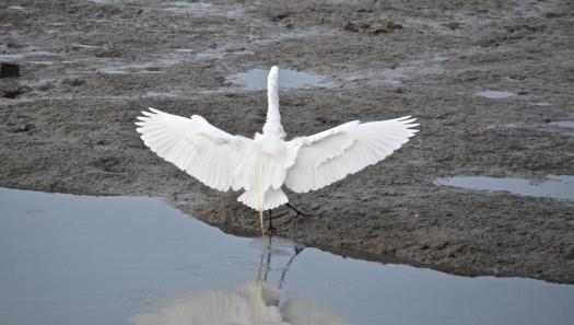 Bird Asana